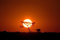 The sun sets in deception Valley in the heart odf the Central Kalahari Game Reserve in Botswana
