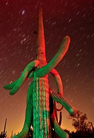 Saguaro cactus in Ironwood Forest National Monument at night near Marana, Arizona, USA, in the Sonoran Desert