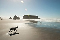 Two dogs on a beach north of Fort Bragg, California, USA