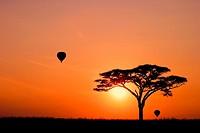 Hot Air Balloons at Sunrise in the Serengeti National Park, Tanzania