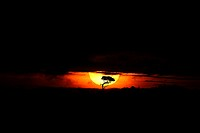 Sunrise in Seronera in the Serengeti National Park, Tanzania