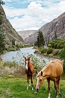 Two Horses by a River Valley  Ollantaytambo, Peru