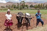 Husband and Wife Peruvian Farmers with their Oxen  Chinchero, Peru