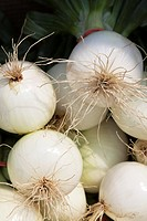 Close-up of white onions with greens attached for sale at a farmer´s market
