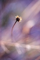 dry flower in nature