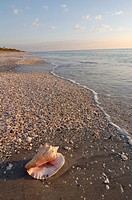 SHELL ON CASPERSEN PARK BEACH, GULF OF MEXICO, VENICE, FLORIDA