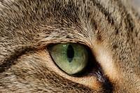 Closeup of a cat´s eye