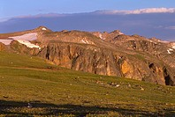 Early morning light on tundra, view northwest from below Beartooth Pass, Beartooth Plateau, Shoshone National Forest, Wyoming, USA