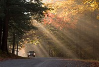 Lone car on road in backlit fog in fall colored trees in Chestnut Ridge Park in Western New York State