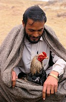 A man is taking care of his cock before a cock fighting in Pakistan