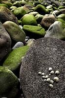 Rocks, San Juan de Gaztelugatxe, Bermeo, Biscay, Basque Country, Spain
