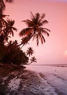 Palm trees at sunset, Biyadhoo island, Maldives