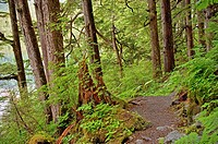 Beaver lake trail, Tongass National Forest, SE Alaska, near Sitka, Alaska, USA