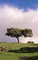 Natural park of Sierra de Andújar, Jaén, Spain