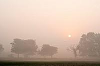 Misty morning landscape, Vrindavan, Uttar Pradesh, India