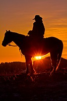 Cowboy silhouette riding horse