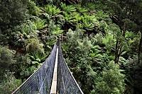 Montezuma Falls suspension bridge  Rosbery, Tasmania, Australia