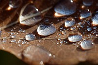 Dew-drops on a brown leaf in autumn