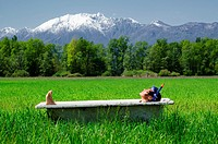 Woman lying in a bathtub on a green field with grass and trees and with snow-capped mountains