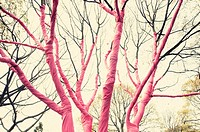 Tree covered by a pink sheet.