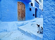 A cat at the door in the blue town of Chefchaouen, Morocco