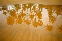 Palm trees reflected in the wet sand in the beach, Venezuela