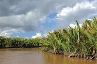 Sekonyer River with Nipa Palms Nypa fruticans, Province Kalimantan, Borneo, Indonesia