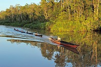 Fishermen on the Sekonyer River, driving home after fishing, Province Kalimantan, Borneo, Indonesia