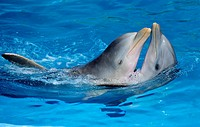 Dolphins making show in Miramar aquarium,Havana,Cuba