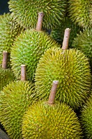 Durians spiky fruit Malaysia