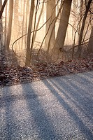 bare trees in early morning light by side of road, Indiana