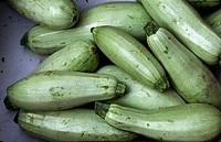 many green zucchini Cucurbita pepo