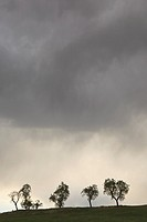 Silhouetted trees on a cultivated fields with dark storm clouds  Lleida  Catalonia  Spain