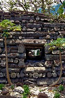 Columns of natural prismatic basalt form the ramparts of Nan Madol  Pohnpei Ponape, Federated States of Micronesia