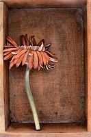 A dead cut flower in a wooden box