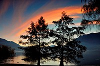 Trees on the lake front with mountain and blue sky and orange clouds in sunrise