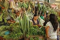 Aloe vera and herbs vendor, Vegetables Market, Colombia, South America