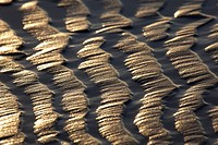 Texture in the sand, Valdearenas beach, Liencres, Cantabria, Spain