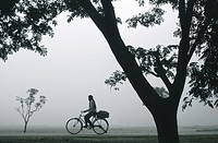 During a foggy morning, a man is riding a cycle. Teraï region, Nepal.