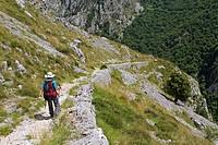 Hikers walking down from Tresviso, a small village in Picos de Europa National Park by historic Urdón path to La Hermida Gorges  Peñarrubia  Cantabria...