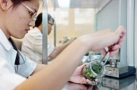 Lab workers culvating orchid species and hybrids in a laboratory