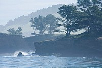 Coal Chute Point and Whalers´ Cove, Point Lobos State Reserve, Monterey County, California, USA, on a foggy morning, Monterey pine Pinus radiata and M...