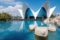 Aquarium known as Oceanografic  Located in the City of Arts and Sciences is the largest aquarium in Europe  Valencia, Spain