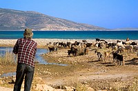 greece, cyclades, naxos: South, Shepherd and goats
