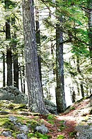 A beautiful scenic photo of the woods in New Hampshire