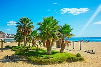 Palm trees on a beach in Fuengirola, Andalusia region, Costa del Sol, Spain