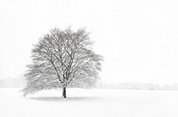 A single tree in a field during a snowstorm