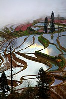 China, Yunnan, Yuanyang, Shengcun, rice terraces,