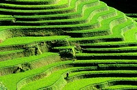 Yuanyang; Rice Terrace; Rice Paddies; Terraced Rice Fields; China.