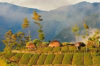 Dani Hubla Village, Papua